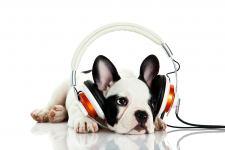 В Германии начала работать радиостанция для собак