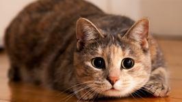 «Радио Дача» выбирает «Главную кошку страны»